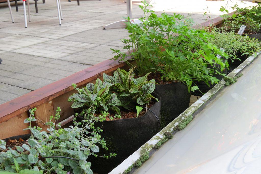 Auberge saint antoine les urbainculteurs for Auberge jardin antoine