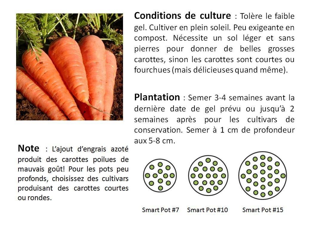 Faire Pousser Des Oignons En Pot les légumes – les urbainculteurs