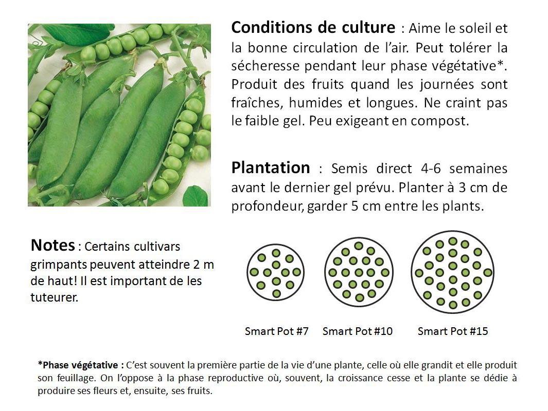 Planter des fruits planter rempoter un oranger duintrieur quand planter un fraisier comment - Quand tailler les abricotiers ...