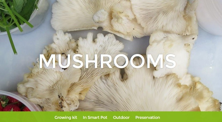 Mushrooms – Les Urbainculteurs
