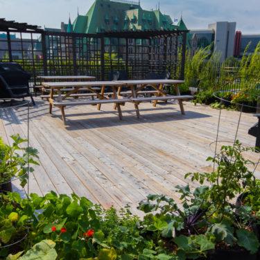 Une table à pique-nique sur un patio de bois est entourée de végétaux.