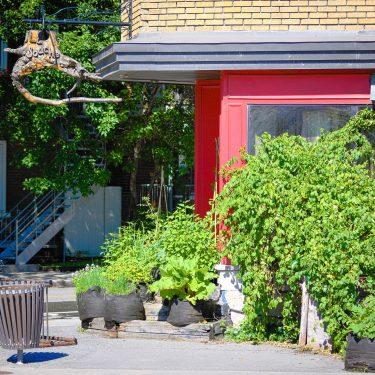 """Coin d'un bâtiment, avec la pancarte """"La Souche"""" suspendue, et de nombreux végétaux verdissant le devant du bâtiment."""