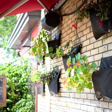 Pochettes de géotextiles suspendues le long d'un mur de briques et contenant, entre autres, des capucines.