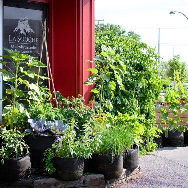 De nombreux pots contenants tout de sorte de verdures sont disposées devant une porte, à l'entrée d'un bâtiment.