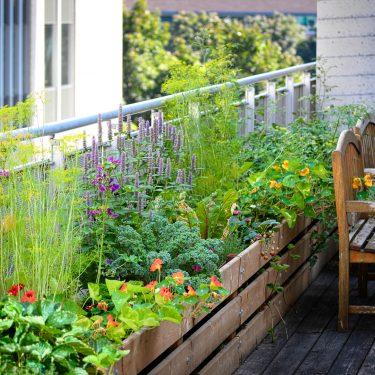 Le long d'une terrasse surélevée, un long bac en bois contient des dizaines de plantes aux fleurs colorées et au feuillage vert vif. Deux bancs de bois permettent de s'asseoir juste à côté.