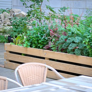 Un bac de bois contient du kale, de l'amaranthe, de l'agastache et de la bette à carde, derrière une table et des chaises.