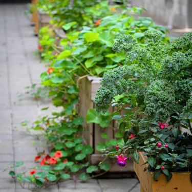 Le long d'un couloir extérieur pavé, des bacs de bois contiennent du kale, des capucines, de l'agastache et de nombreuses autres plantes.