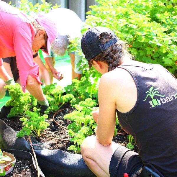 Une personnes accroupie, de dos, entretien un jardin en pot. En arrière-plan, deux autres personnes collaborent au jardinage