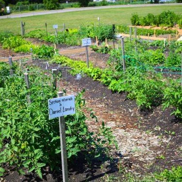 """Rangées dans un jardin communautaire. Une pancarte indique """"Section réservée à Daniel Landry""""."""
