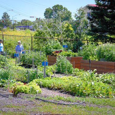Vue d'ensemble du jardin communautaire. Deux personnes âgées dicsutent au fond du jardin.