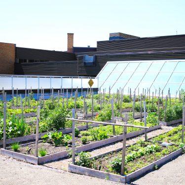 Parcelles de jardin communautaire sur le toit du Cégep Limoilou. La verrière de la bibliothèque est visible à l'arrière.