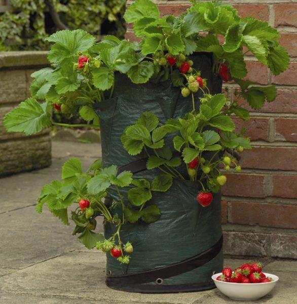 Pot pop up fraises et fines herbes les urbainculteurs - Fines herbes en pot interieur ...