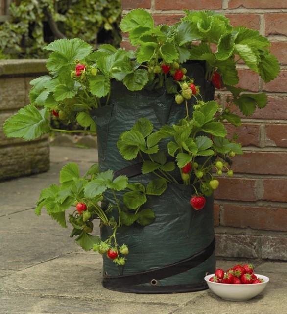 pot pop up fraises et fines herbes les urbainculteurs. Black Bedroom Furniture Sets. Home Design Ideas