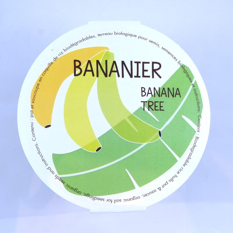 bananier en pot – les urbainculteurs