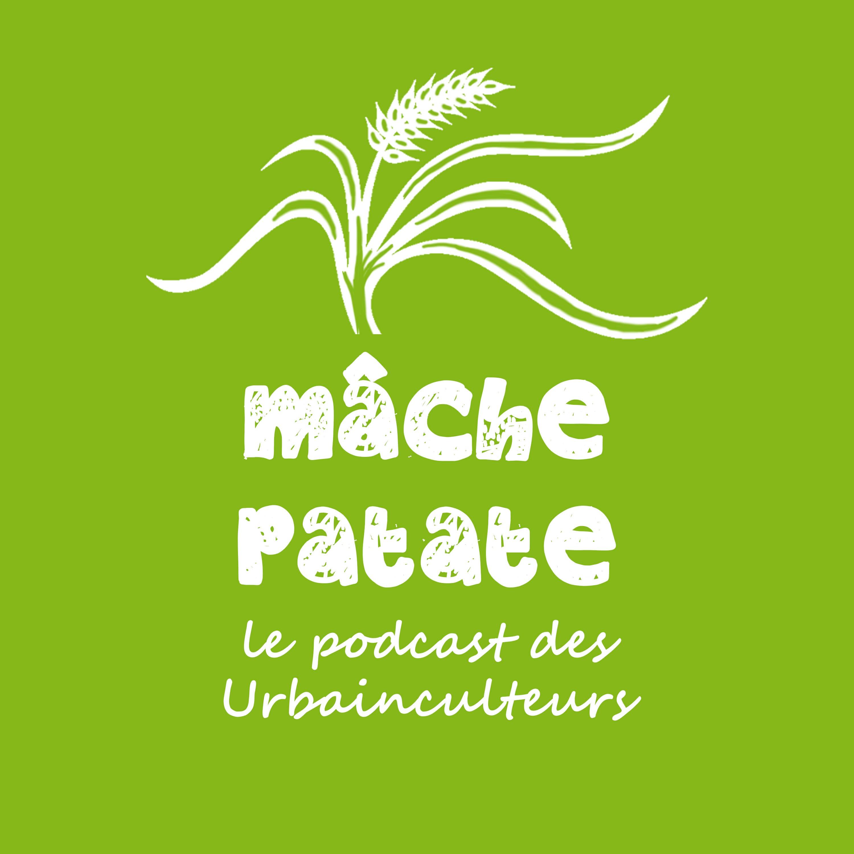 Mâche-patate