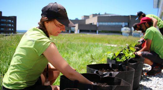 Une horticultrice prépare le sol dans un pot. En arrière-plan, d'autres horticulteurs s'affairent sur le toit vert.