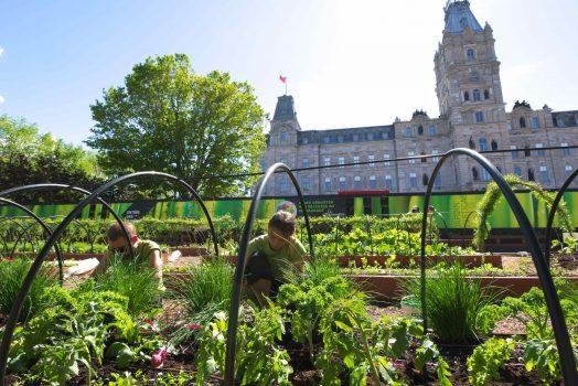 Un potager devant l'Assemblée nationale du Québec