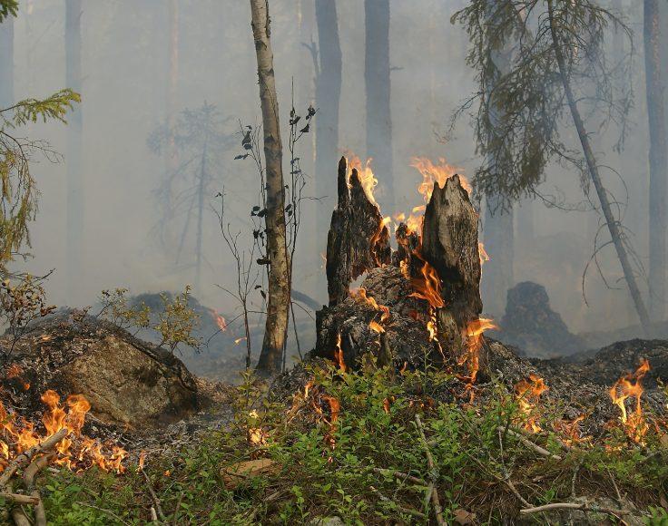 Souche d'arbre en feu au milieu d'une forêt emboucanée