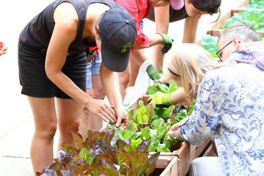Des personnes jardinent dans un bac en bois