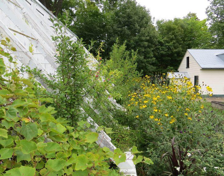 Un aménagement d'arbres fruitiers, d'herbes médicinales et de fleurs. Bâtiment à l'arrière-plan.