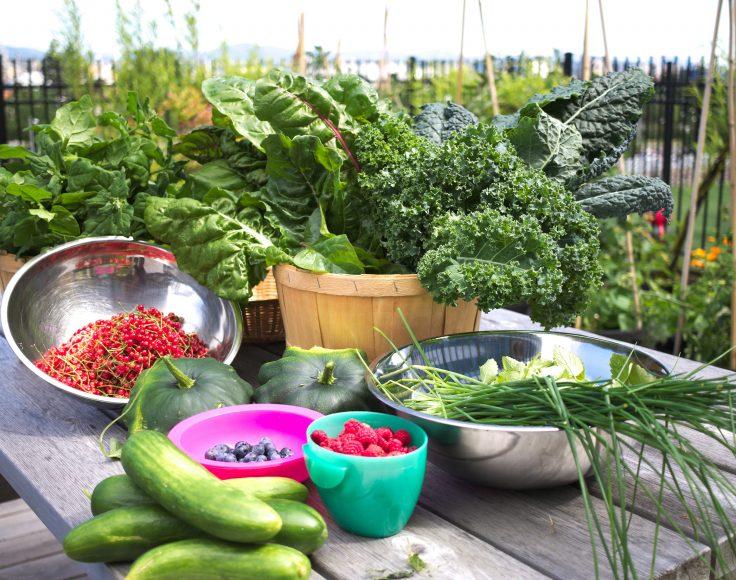Récolte de divers légumes sur une table à pique-nique