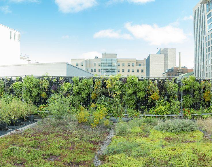 Jardins verticaux sur un toit vert, avec une ville à l'arrière-plan.