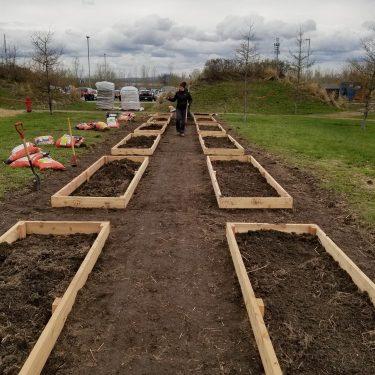Une horticultrice supervise la construction des cadres de bois qui formeront le pourtour des parcelles de jardin communautaire.