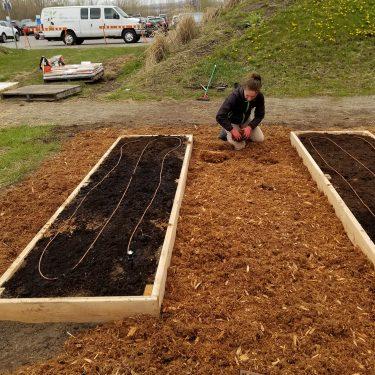 Une horticultrice étend du paillis entre deux parcelles de culture.