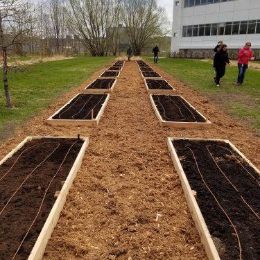 Des parcelles de jardin communautaire, entourées de planches de bois, sont disposées sur une partie de terrain recouverte de paillis.