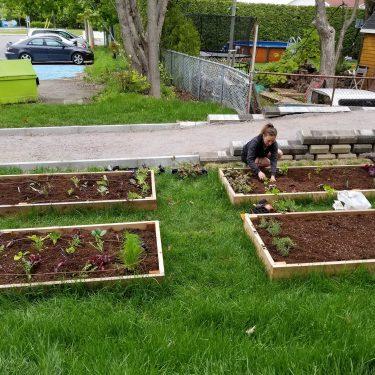 Une horticutrice entretien l'un de quatre jardinets à hauteur du sol.