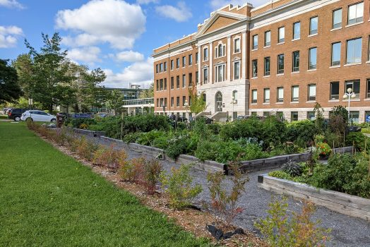 Une haie de jeunes bleuetiers et un grand jardin communautaire luxuriant sont situés en façade d'un bâtiment de brique.