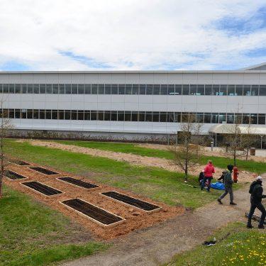 Des parcelles de jardin communautaire sont disposées sur un grand terrain gazonné, à l'arrière d'un grand bâtiment industriel.