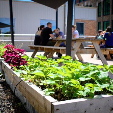 Plants de fraises dans une plate-bande potagère. À l'arrière-plan, de jeunes adultes sont assis à une table à pique-nique.