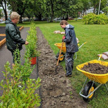 Deux horticulteurs plantent des bleuetiers sous la pluie.