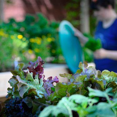 Gros plan sur diverses verdurettes. À l'arrière, une horticultrice entretien des jardinets.