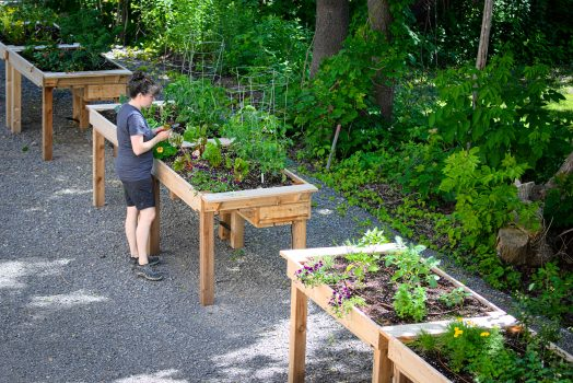 Une horticultrice entretien les jardinets plantés dans des bacs surélevés.