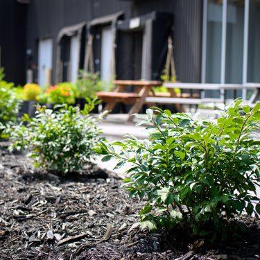 Rangée de petits arbustes à l'avant-plan; tables à pique-nique devant un bâtiment industriel à l'arrière-plan.