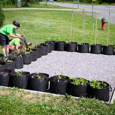 Deux horticultrices sont en train de mettre en place une rangée de pots en géotextile formant un U, sur une portion de terrain recouverte de gravier, entourée de gazon.