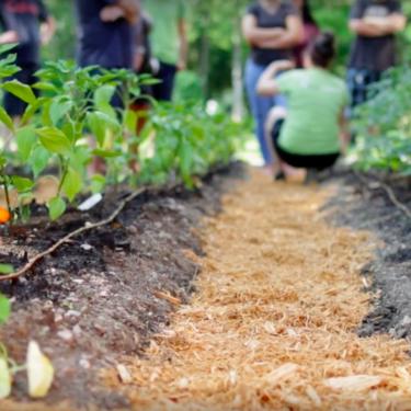 Des personnes sont regroupées au fond d'un jardin et discutent.