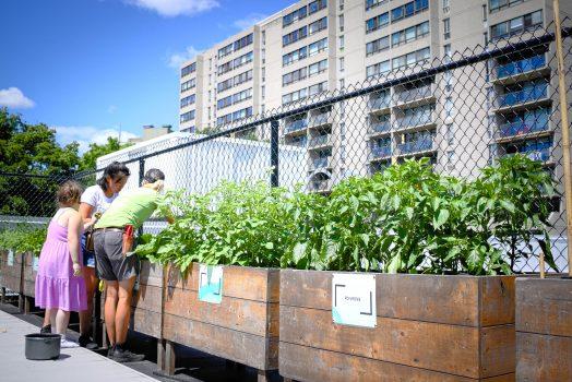 Une horticultrice discute avec une femme et une fillette tout en entretenant le jardin planté dans des bacs de bois, le long d'une clôture métallique. Des immeubles sont visibles à l'arrière.