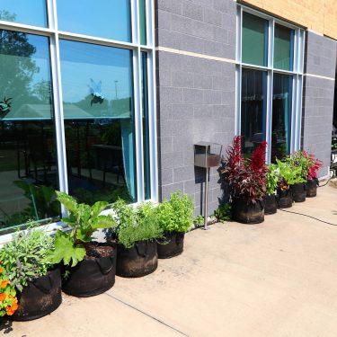 Une rangée de pots cultivés contenant des fines herbes et des fleurs longent le mur extérieur d'un bâtiment.