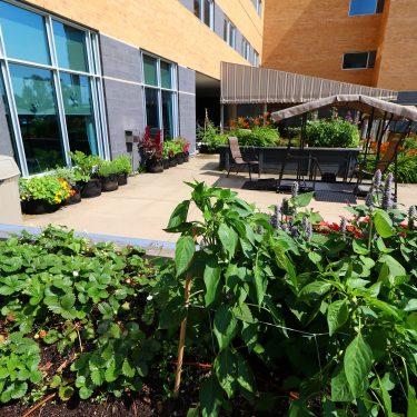 Diverses plantes, dont de l'agastache et des fraises, poussent dans différents bacs de culture disposés dans la cour d'un bâtiment. Une balançoire est placée au centre de la cour.