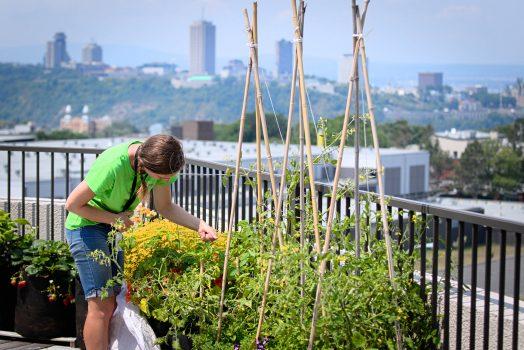 Une horticultrice est pensée sur une rangée de pots remplis de végétaux (tomates, fleurs, poivrons) qui longe une rambarde de balcon. On aperçoit les immeubles du centre-ville de Québec au loin.