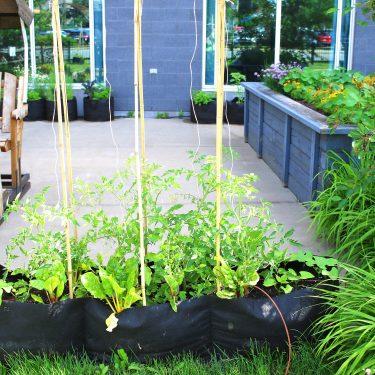 Des plants de tomates poussent dans un grand pot de géotextile. À l'arrière, on aperçoit davantage de bacs de culture et une balançoire.
