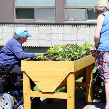 Trois femmes âgées, dont deux en chaises roulantes, sont placées autour d'un bac de culture surélevé et l'observent.