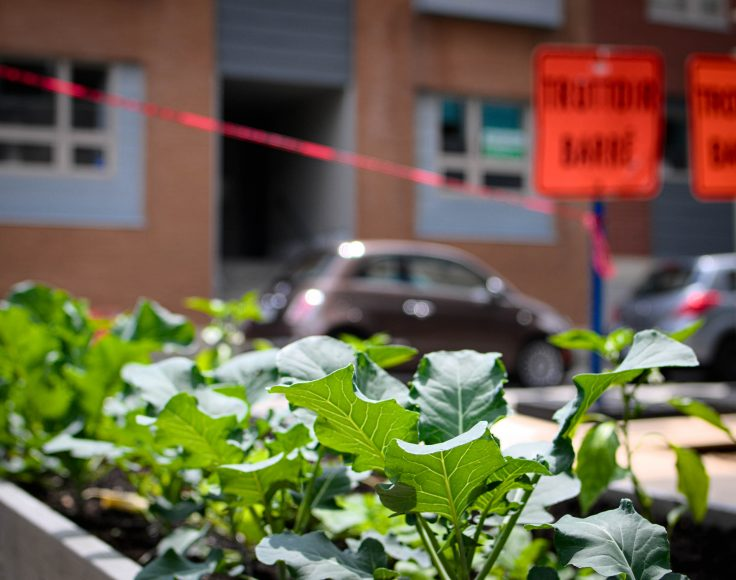 """Des brocolis poussent au premier plan, dans un environnement très urbain. À l'arrière, des voitures sont stationnées devant un bâtiment et un ruban orange bloque l'accès, avec une pancarte indiquant """"Trottoir barré""""."""