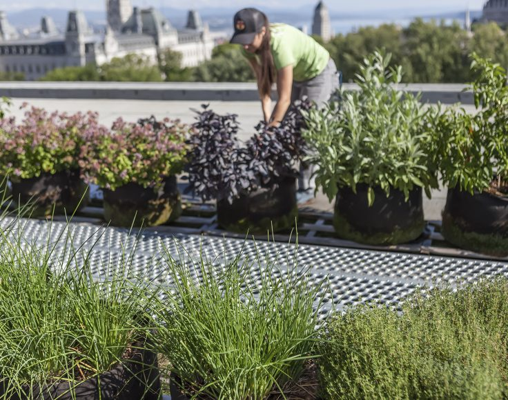 Une jeune femme est penchée pour entretenir une plante dans un pot. Elle se trouve dans un jardin en pots installé sur la toiture d'un bâtiment. À l'arrière-plan, on aperçoit la cime des arbres et des bâtiments lointains.