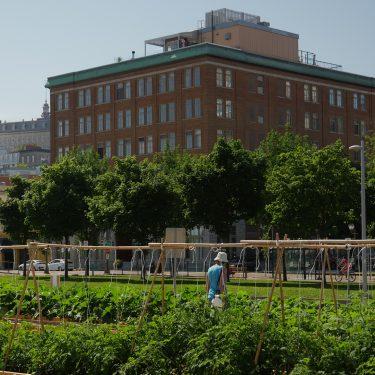 Une femme, vue de dos, se promène dans les jardins, dont on aperçoit principalement du feuillage et des tuteurs en bambou. À l'arrière, d'imposants bâtiments urbains.