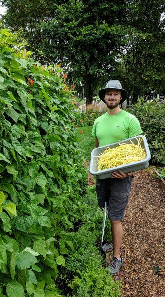 Un jeue homme souriant, portant un t-shirt vert des Urbainculteurs et un chapeau, tient un bac rempli de haricots jaunes. Il est à côté d'une rangée de haricots grimpants.