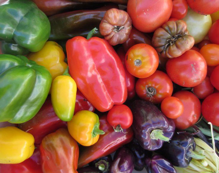 Divers poivrons et tomates de formes et de couleurs variées
